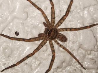 横浜市緑区から蜘蛛の駆除についてのご相談
