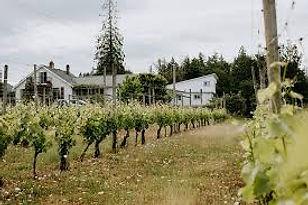 Emandare Vineyard Guest House