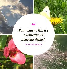 Pink Flower Summer Quotes Instagram Post