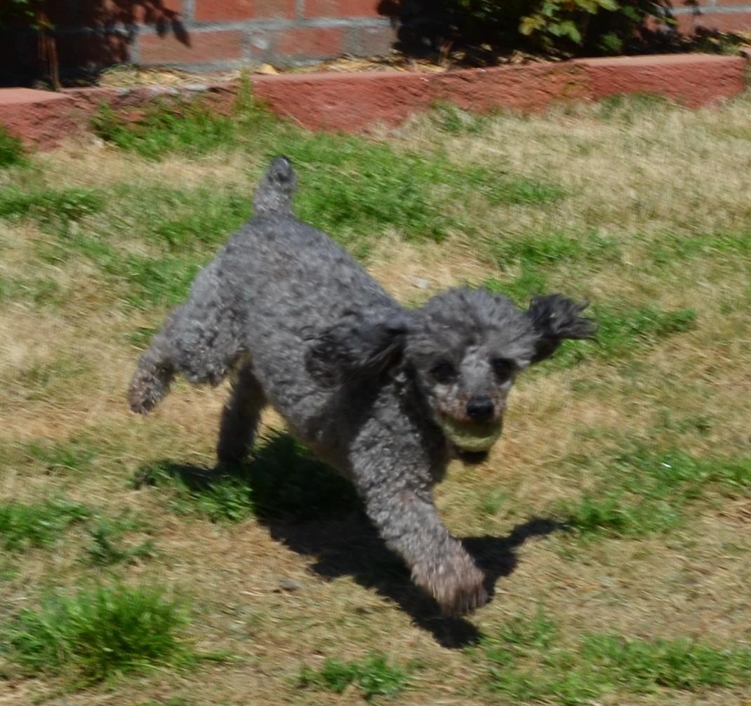 dog playing3.jpg