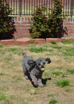 dogplaying5.jpg