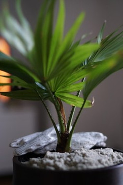 plante pot1