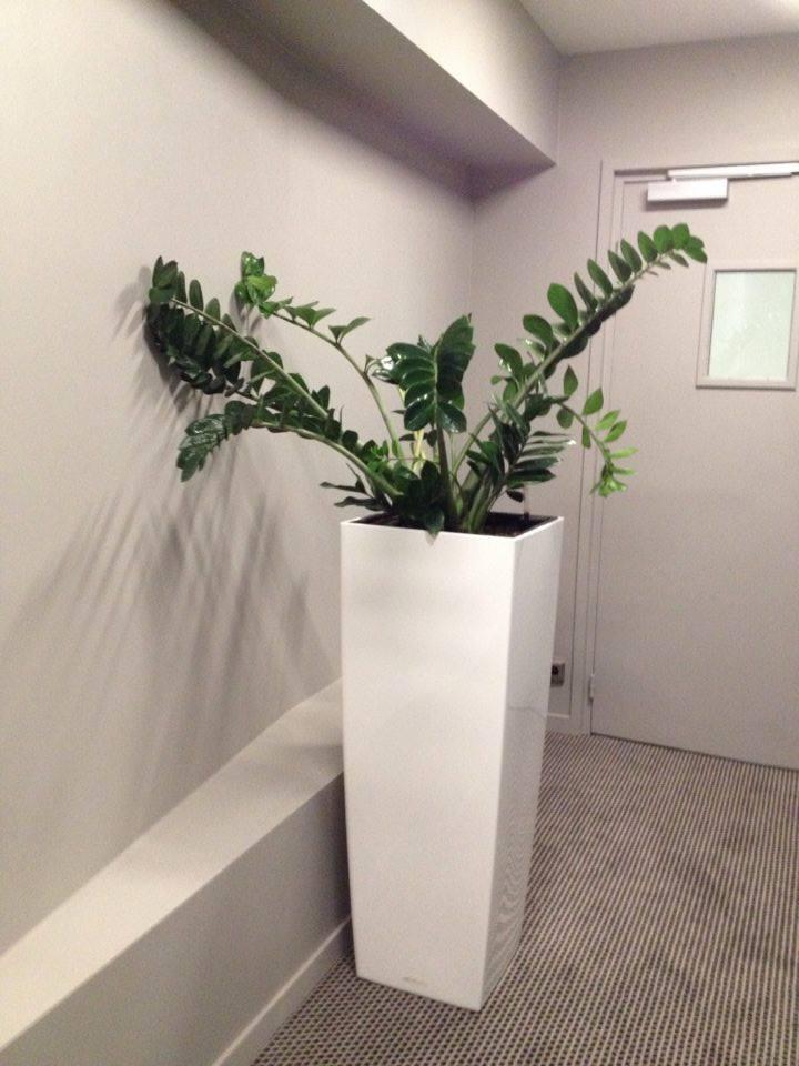 plante 10