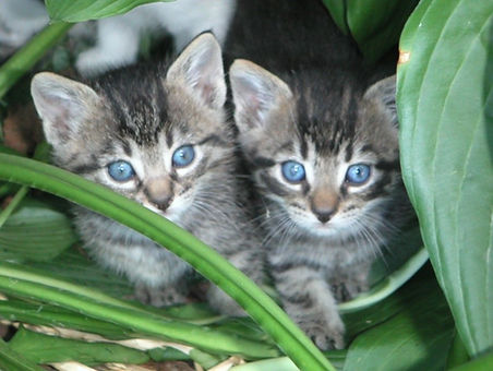 So you found a kitten      Hayward Animal Shelter