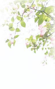 454187_flower.jpg