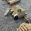 Thumbnail: Combat TraumaPAK ELITE