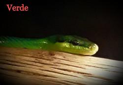 Verde_edited