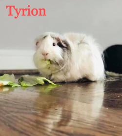 Tyrion_edited
