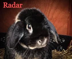 Radar_edited