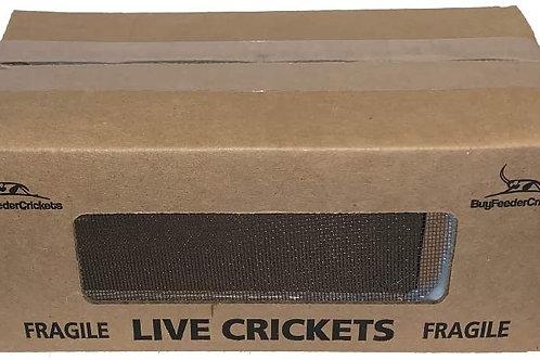 1,000 Crickets