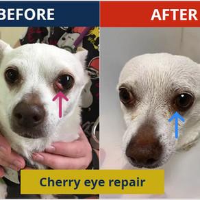 Cherry eye repair