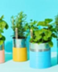 planting-indoor-herbs-1563898908%20(1)_e