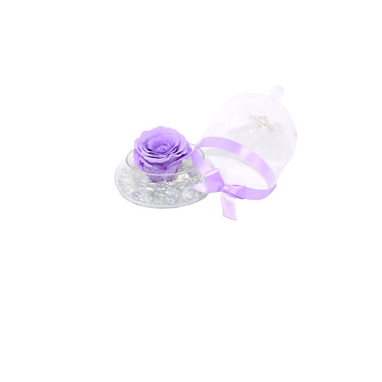 One Love Light Purple Preserved Rose (Only Miami)