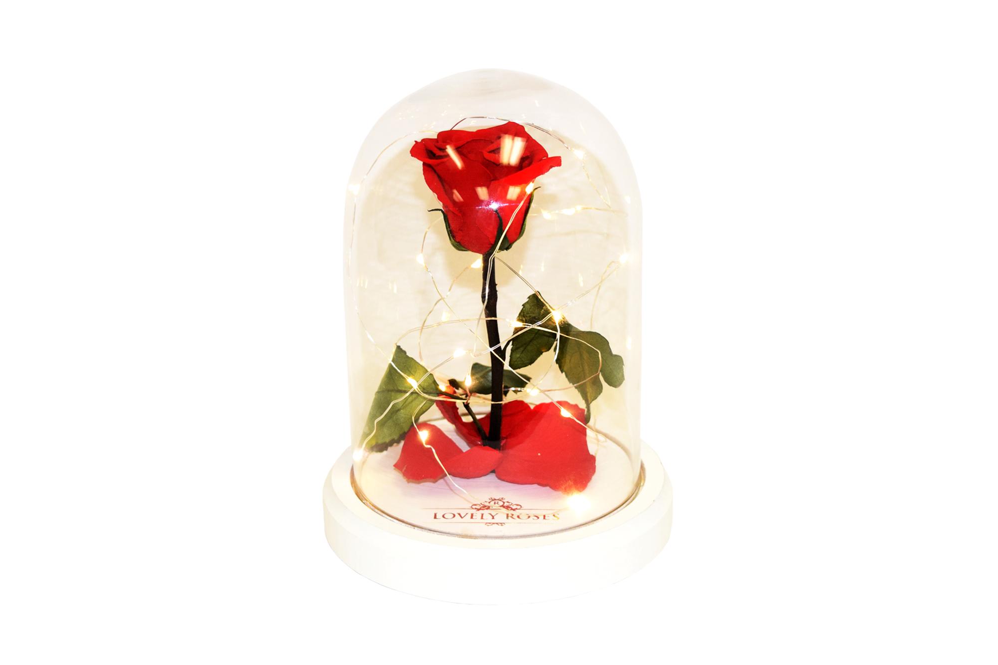 LIGHTING ENCHANTED ROSE CRISTAL BOX BASE BLANCA FONDO BLANCO