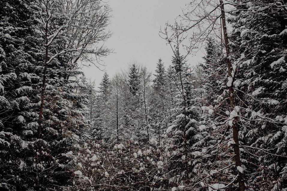 sesja zimowa (54).jpg