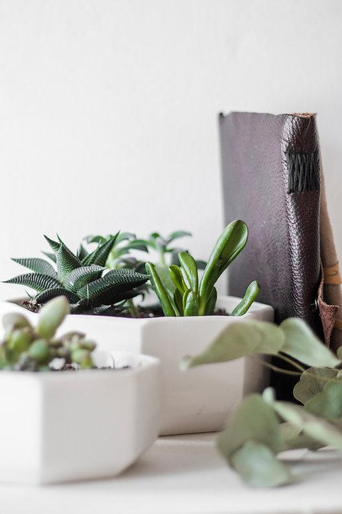 Octagon Tabletop Planters