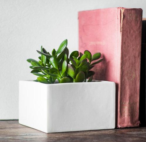 Square Modern Bookends Planter