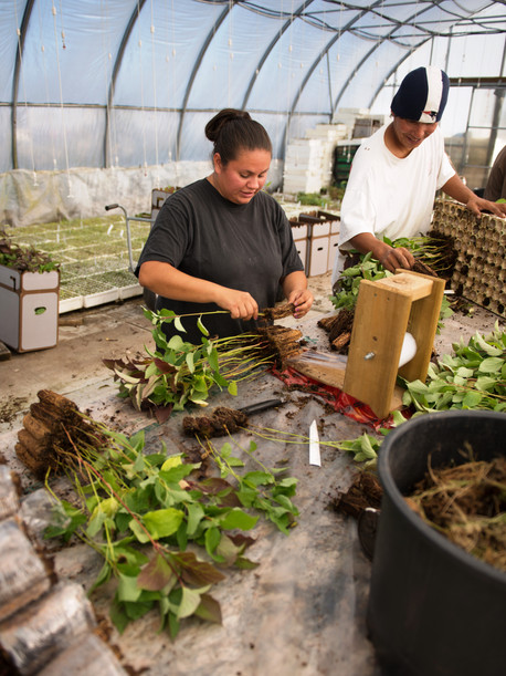 Growing Our Futures: Native Plant Horticulture Program
