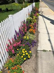 wcom pollinator flowers.jpg