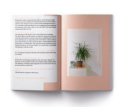 Eine kleine Palme steht auf einem Regal. Bild zu demGrafik Design Projekt: Kreatives  in Kosovo