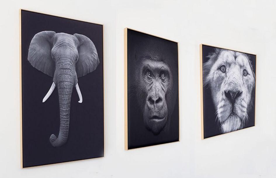 myO Quieto-3D Save Wildlife
