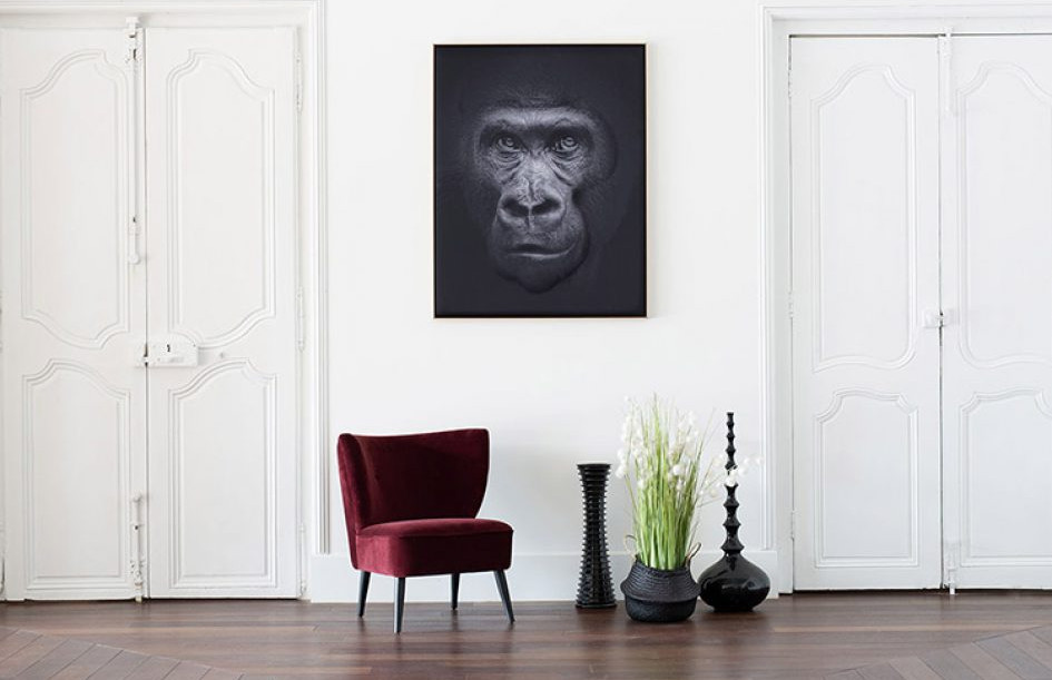 myO Quieto-3D Gorilla