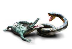 snake and crcadile_edited-1.jpg