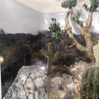 IOJ Dry Forrest