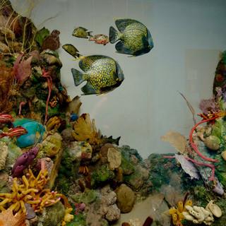 Coral Reef IOJ