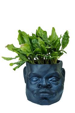 Male Head Pot