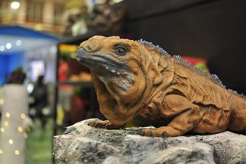 Iguana