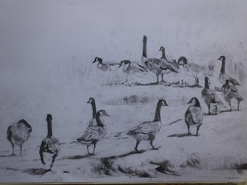 Study of Birdlife