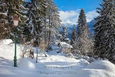 jaysinia hiver.jpeg