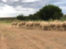 farming at pink hill karoo.jpg