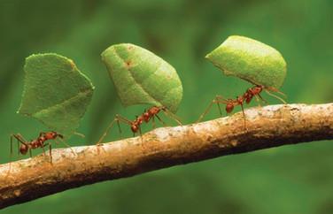 Teamwork| Teamwork is necessary!