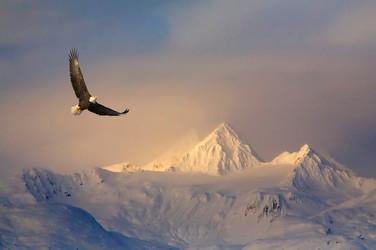 Attitude  Your attitude determines your altitude!