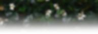 Small-Green-WALLPAPER-min_edited.png