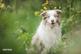 Portret van je huisdier - Dendermonde