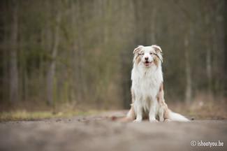 portret hond