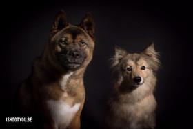 Hondenfotografie voor vzw Animal Trust M
