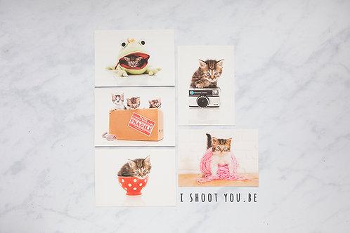 5 Wenskaarten Kittens