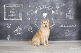 hondenfoto