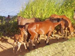 horsess.jpg