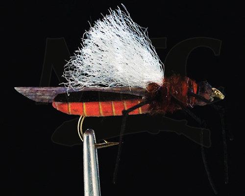 True Salmonfly