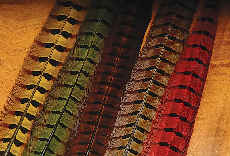Ringneck pheasant Tail pairs