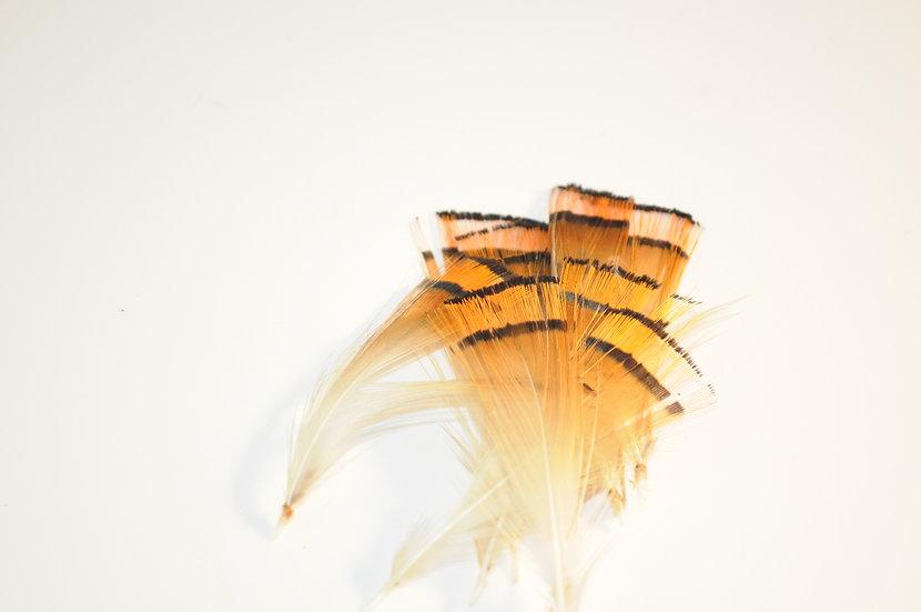 Golden Pheasant Tippets