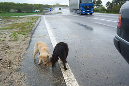Abandoned and neglected dogs