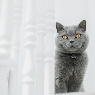 cat yellow eyes