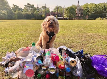 Environmentally friendly pup!