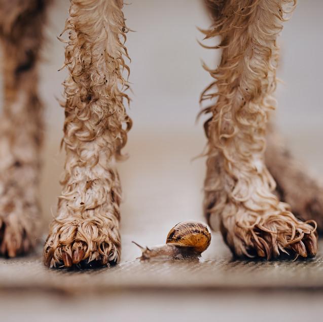 snail dog legs paws
